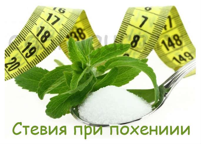 stevia 4