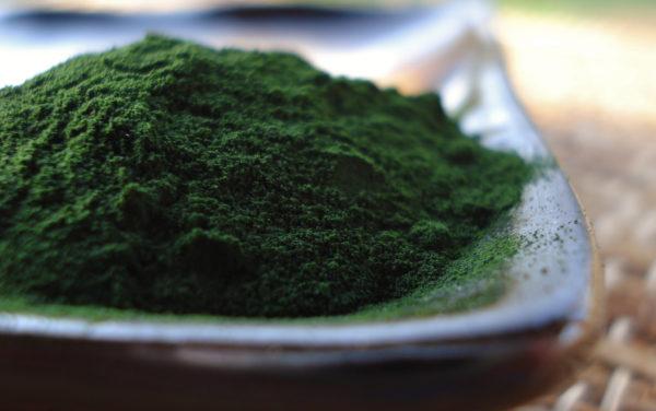 водоросль хлорелла фото